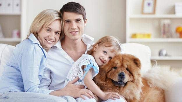 Wills & Trusts dog-young-family Direct Wills Edgbaston